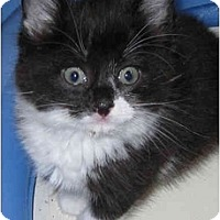 Adopt A Pet :: Felix - Catasauqua, PA