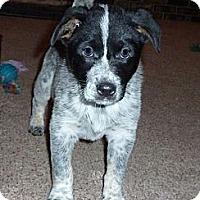 Adopt A Pet :: Griswold - Oak Creek, WI
