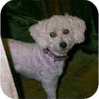 Adopt A Pet :: Char - dewey, AZ