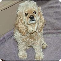 Adopt A Pet :: Princess - Westfield, IN