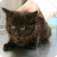 Adopt A Pet :: BINKS - Whitestone, NY
