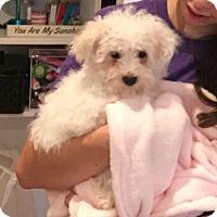 Adopt A Pet :: Spencer - Stamford, CT