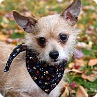 Adopt A Pet :: Abe - Davison, MI