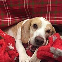 Adopt A Pet :: Barnie - Temple, GA