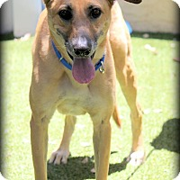 German Shepherd Dog Mix Dog for adoption in Ft. Lauderdale, Florida - Mortimer