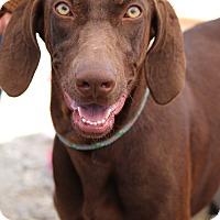 Adopt A Pet :: Melody - Fillmore, CA