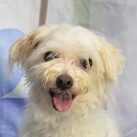 Adopt A Pet :: Dee Dee - Englewood, FL