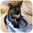 Photo 1 - Calico Cat for adoption in Wakinsville, Georgia - Iris