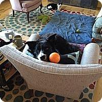 Adopt A Pet :: Hank - Glenrock, WY