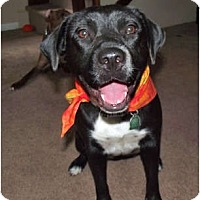 Adopt A Pet :: Tipsy - Indianapolis, IN