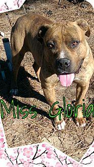 Pit Bull Terrier/Mastiff Mix Dog for adoption in Cranford, New Jersey - Gloria