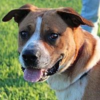 Adopt A Pet :: Chevy - Owasso, OK