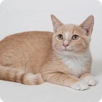 Adopt A Pet :: Marlin - Lombard, IL
