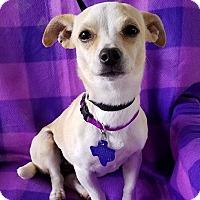 Adopt A Pet :: Music - San Antonio, TX