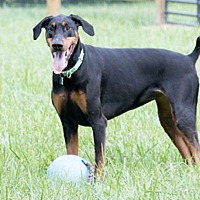 Adopt A Pet :: NAYLA - Greensboro, NC