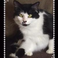 Adopt A Pet :: Cookie - Bradenton, FL