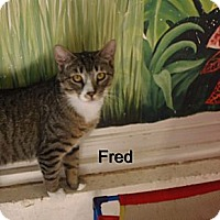 Adopt A Pet :: Fred - Catasauqua, PA