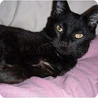 Adopt A Pet :: Cody - Rancho Palos Verdes, CA