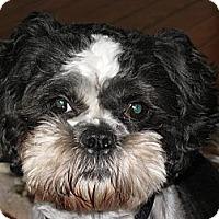 Adopt A Pet :: Gizmo - Mt Gretna, PA