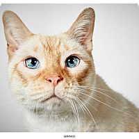 Adopt A Pet :: Santiago - New York, NY