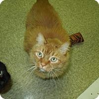 Adopt A Pet :: Henri - Medina, OH