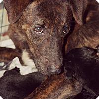 Adopt A Pet :: Grace - Fredericksburg, VA