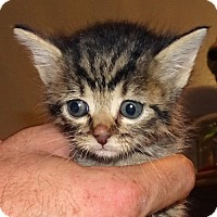 Adopt A Pet :: Zelda - Helotes, TX