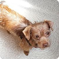 Adopt A Pet :: Angelo - San Diego, CA