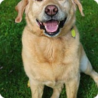 Adopt A Pet :: Maggie - Chester Springs, PA