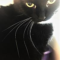 Adopt A Pet :: Remi - Meridian, ID