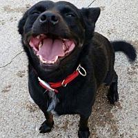 Adopt A Pet :: Tipper - Dallas, TX
