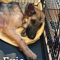 Adopt A Pet :: Evie - Martinez, CA