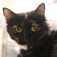 Adopt A Pet :: Scarlette - Dallas, TX