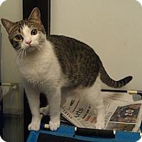 Adopt A Pet :: Daisy - Greenville, SC