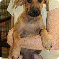 Adopt A Pet :: Texas - Philadelphia, PA