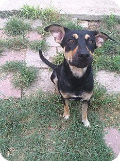 Shepherd (Unknown Type) Mix Dog for adoption in San Antonio, Texas - Jenny