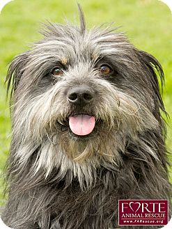 Tibetan Terrier Mix Dog for adoption in Marina del Rey, California - Chance