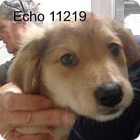 Adopt A Pet :: Echo - Greencastle, NC