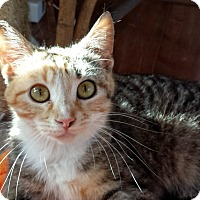 Adopt A Pet :: Blossom - Manitowoc, WI
