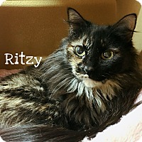 Adopt A Pet :: Ritzy - Foothill Ranch, CA