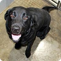 Adopt A Pet :: Kasia - New Canaan, CT