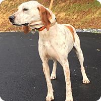 Adopt A Pet :: Becky - Cashiers, NC