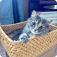 Adopt A Pet :: Delilah - Washington, DC