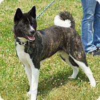 Adopt A Pet :: Caesars - Troy, MI