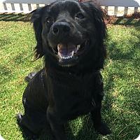 Adopt A Pet :: Abby - Santa Ana, CA