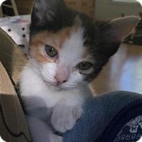 Adopt A Pet :: Callie - San Jose, CA
