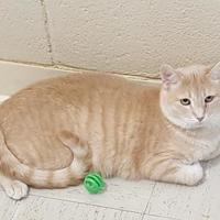 Adopt A Pet :: Sunny Day - Erie, PA
