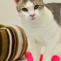 Adopt A Pet :: Aphrodite - Dayton, OH
