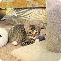 Adopt A Pet :: Kira - Carlisle, PA