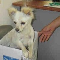Adopt A Pet :: Pippin - Santa Barbara, CA